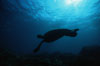 Green sea turtle. Maui, Hawaii, USA. Image #00316