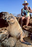 Galapagos sea lion. North Seymour Island, Galapagos Islands, Ecuador. Image #01669