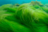 Surf grass on the rocky reef -- appearing blurred in this time exposure -- is tossed back and forth by powerful ocean waves passing by above.  San Clemente Island. San Clemente Island, California, USA. Image #10237