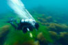 A SCUBA diver exhales a breath of air as he swims over surf grass on the rocky reef.  All appears blurred in this time exposure, as they are moved by powerful ocean waves passing by above.  San Clemente Island. San Clemente Island, California, USA. Image #10241