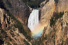 A rainbow appears in the mist of the Lower Falls of the Yellowstone River.  At 308 feet, the Lower Falls of the Yellowstone River is the tallest fall in the park.  This view is from the famous and popular Artist Point on the south side of the Grand Canyon of the Yellowstone.  When conditions are perfect in midsummer, a morning rainbow briefly appears in the falls. Yellowstone National Park, Wyoming, USA