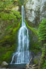 Marymere Falls cascades 90 feet through an old-growth forest of Douglas firs, near Lake Crescent. Lake Crescent, Olympic National Park, Washington, USA. Image #13765
