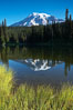 Mount Rainier is reflected in the calm waters of Reflection Lake, early morning. Reflection Lake, Mount Rainier National Park, Washington, USA. Image #13852