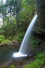 Ponytail Falls, where Horsetail Creeks drops 100 feet over an overhang below which hikers can walk. Columbia River Gorge National Scenic Area, Oregon, USA. Image #19338