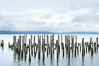 Derelicts pilings, remnants of long abandoned piers. Columbia River, Astoria, Oregon, USA. Image #19385