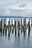 Derelict pilings, remnants of long abandoned piers. Columbia River, Astoria, Oregon, USA. Image #19386