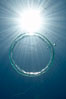 A bubble ring.  A toroidal bubble ring rises through the water on its way to the surface. Image #20779