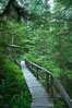 Rainforest Trail in Pacific Rim NP, one of the best places along the Pacific Coast to experience an old-growth rain forest, complete with western hemlock, red cedar and amabilis fir trees. Moss gardens hang from tree crevices, forming a base for many ferns and conifer seedlings. Rainforest Trail, Pacific Rim National Park, British Columbia, Canada. Image #21051