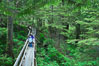 Hikers admire the temperate rainforest along the Rainforest Trail in Pacific Rim NP, one of the best places along the Pacific Coast to experience an old-growth rain forest, complete with western hemlock, red cedar and amabilis fir trees. Moss gardens hang from tree crevices, forming a base for many ferns and conifer seedlings. Rainforest Trail, Pacific Rim National Park, British Columbia, Canada. Image #21056