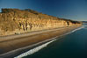 Torrey Pines seacliffs, rising up to 300 feet above the ocean, stretch from Del Mar to La Jolla.  On the mesa atop the bluffs are found Torrey pine trees, one of the rare species of pines in the world. Torrey Pines State Reserve, San Diego, California, USA. Image #22285