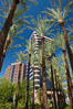 Palm trees and blue sky, office buildings, downtown Phoenix. Phoenix, Arizona, USA. Image #23177