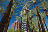 Palm trees and blue sky, office buildings, downtown Phoenix. Phoenix, Arizona, USA. Image #23185