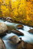 Aspens turn yellow in autumn, changing color alongside the south fork of Bishop Creek at sunset. Bishop Creek Canyon, Sierra Nevada Mountains, Bishop, California, USA. Image #23329