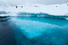 The underwater edge of an iceberg, with a few Adelie penguins on it. Brown Bluff, Antarctic Peninsula, Antarctica. Image #24781