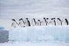 Adelie penguins, in a line, standing on an iceberg. Paulet Island, Antarctic Peninsula, Antarctica. Image #25018