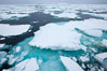 Pack ice, a combination of sea ice and pieces of icebergs, Weddell Sea. Southern Ocean. Image #25025