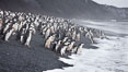Chinstrap penguins at Bailey Head, Deception Island.  Chinstrap penguins enter and exit the surf on the black sand beach at Bailey Head on Deception Island.  Bailey Head is home to one of the largest colonies of chinstrap penguins in the world. Deception Island, Antarctic Peninsula, Antarctica. Image #25452