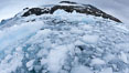 Brash ice and pack ice in Antarctica.  Brash ices fills the ocean waters of Cierva Cove on the Antarctic Peninsula.  The ice is a mix of sea ice that has floated near shore on the tide and chunks of ice that have fallen into the water from nearby land-bound glaciers. Image #25531