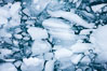 Brash ice floats on cold, dark Antarctic waters. Cierva Cove, Antarctic Peninsula, Antarctica. Image #25532