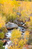 Bishop Creek and aspen trees in autumn, in the eastern Sierra Nevada mountains. Bishop Creek Canyon Sierra Nevada Mountains, Bishop, California, USA. Image #26070