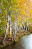 Bishop Creek and aspen trees in autumn, in the eastern Sierra Nevada mountains. Bishop Creek Canyon Sierra Nevada Mountains, Bishop, California, USA. Image #26074