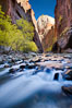 Yellow cottonwood trees in autumn, fall colors in the Virgin River Narrows in Zion National Park. Virgin River Narrows, Zion National Park, Utah, USA. Image #26090