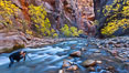 Photographer in the Virgin River Narrows, with flowing water, autumn cottonwood trees and towering red sandstone cliffs. Virgin River Narrows, Zion National Park, Utah, USA. Image #26106