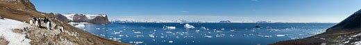 Adelie penguin colony, panoramic photograph. Devil Island, Antarctic Peninsula, Antarctica. Image #26313