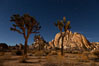 Joshua tree and stars, moonlit night. The Joshua Tree is a species of yucca common in the lower Colorado desert and upper Mojave desert ecosystems. Joshua Tree National Park, California, USA. Image #27713