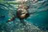 California sea lion underwater, Sea of Cortez, Mexico. Baja California. Image #31216