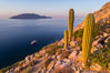 Cardon Cactus on Isla San Diego, Aerial View, Baja California. Mexico. Image #33575