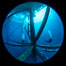 Oil Rig Ellen and Elly, Underwater Structure. Long Beach, California, USA. Image #34655