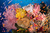 Brilliantlly colorful coral reef, with swarms of anthias fishes and soft corals, Fiji. Bligh Waters. Image #34708