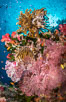 Beautiful South Pacific coral reef, with Plexauridae sea fans, schooling anthias fish and colorful dendronephthya soft corals, Fiji. Namena Marine Reserve, Namena Island. Image #34726