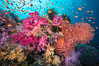 Beautiful South Pacific coral reef, with Plexauridae sea fans, schooling anthias fish and colorful dendronephthya soft corals, Fiji. Image #34768