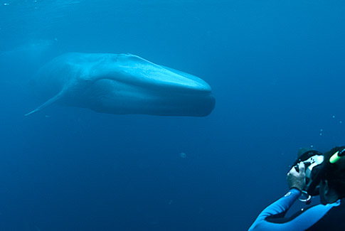 Enormous blue whale approaches me in the open ocean, photo by Mike Johnson / Earthwindow.com