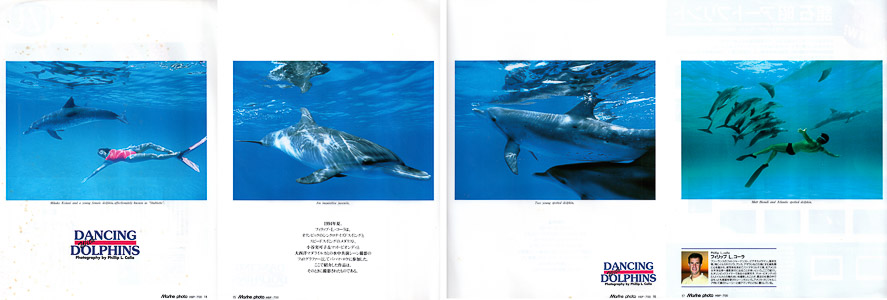 Dolphin Pictorial