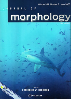 Cover of Morphology