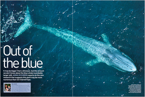 National Geographic Blue Whale Spread