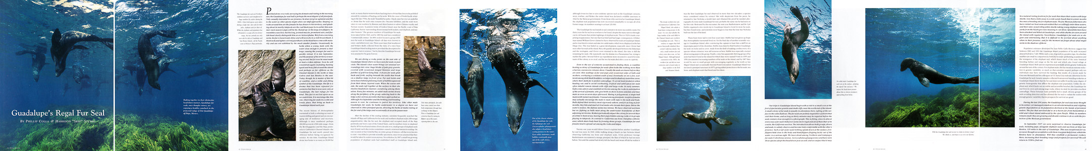 Ocean Realm Guadalupe Fur Seal Article