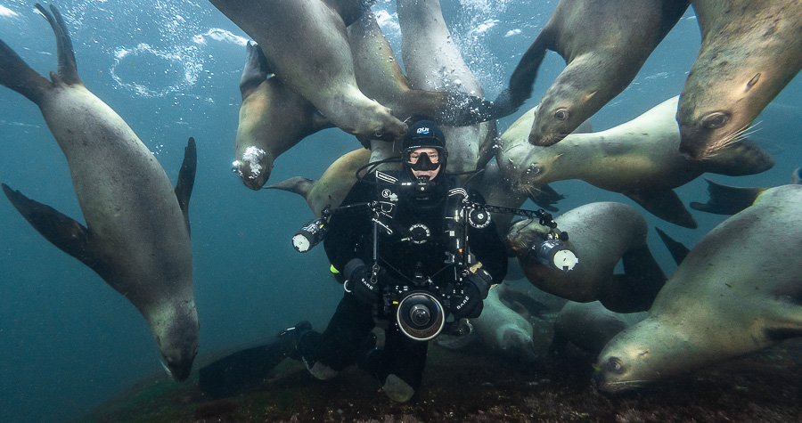 With Steller Sea Lions, British Columbia. Photo by Mike Perdue
