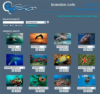 Brandon Cole Marine Photography