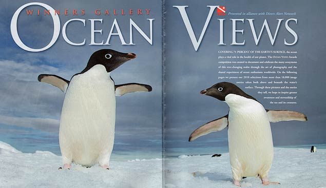 Adelie Penguins, Antarctica, Nature's Best Photography Ocean Views 2010