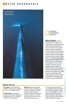 Blue whale dorsal ridge and fluke, underwater, National Geographic Magazine, March 2009, copyright Phillip Colla