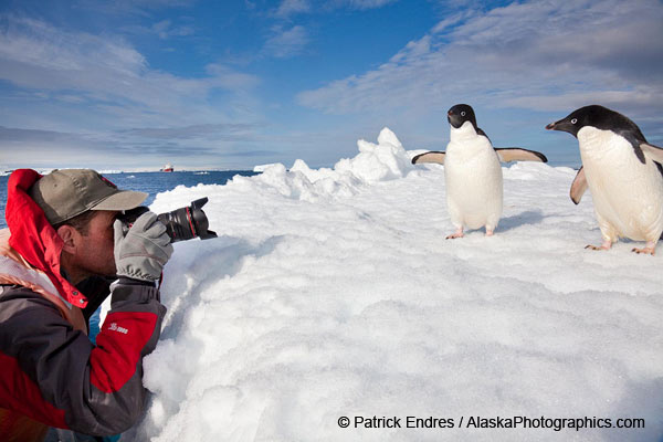 Photographing Adelie penguins at Paulet Island, Antarctic Peninsula, © Patrick Endres / AlaskaPhotographics.com