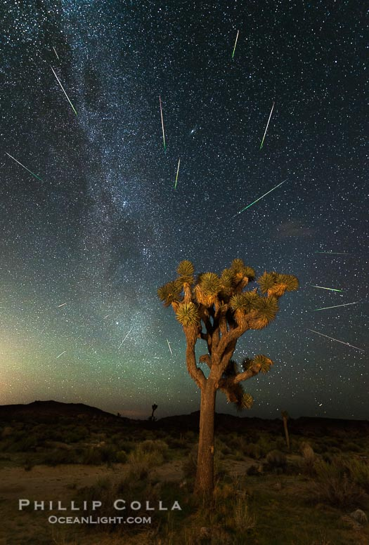 Perseid Meteor Shower over Joshua Tree National Park, 2015