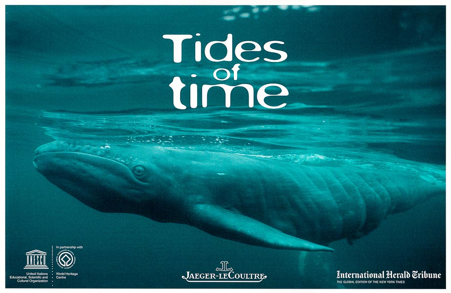 Newborn gray whale calf photograph by Phillip Colla / Oceanlight.com
