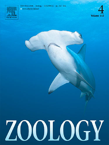 One of my hammerhead shark photos was chosen for the cover of Zoology to