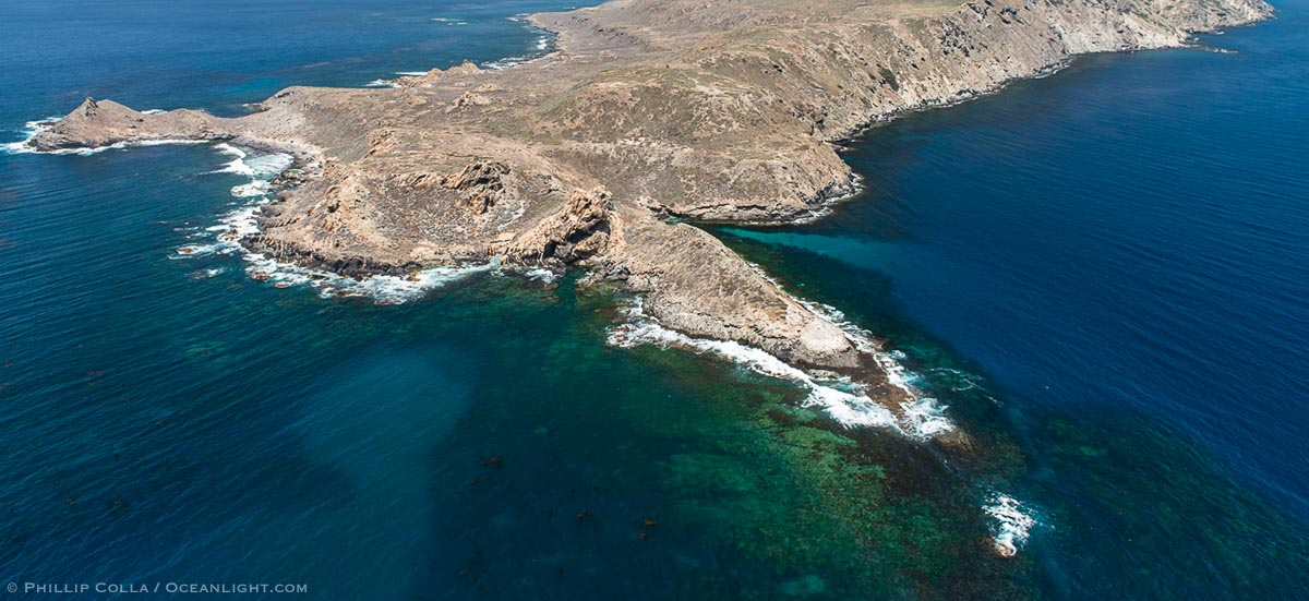 The Disappearing Kelp Forests of San Clemente Island