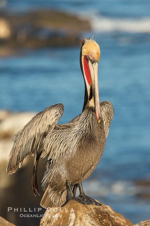 La Jolla Birds